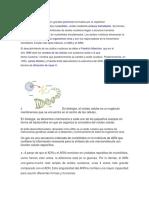 1LosÁcidos NucleicosSon GrandesPolímerosFormados Por La Repetición deMonómerosDenominadosNucleótidos (1)