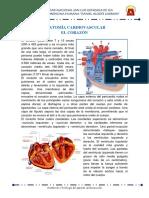 Anatomia y Fisiología Cardiovascular