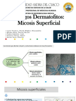 PARTE 1 Hongos Dermatofitos Micosis Superficial