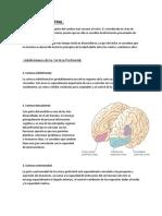 Lobulo Prefrontal
