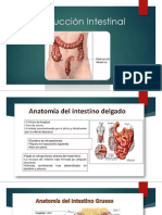 Obstrucción Intestinal Expo Final (1).pptx