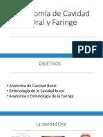 Anatomía de Cavidad Oral y Faringe May