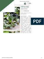 jacinto agua