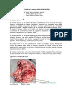 106098869-INFORME-DE-LABORATORIO-DE-BIOLOGIA-1.docx