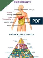 Sistema Digestório - Apresentação