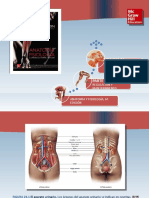 Saladin Anatomia 6a Diapositivas c23 APARATO URINARIO
