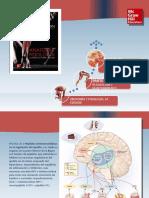 Saladin Anatomia 6a Diapositivas c26 NUTRICION