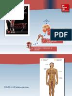 Saladin Anatomia 6a Diapositivas c12 TEJIDO NERVIOSO