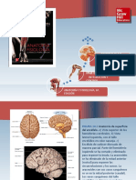 Saladin Anatomia 6a Diapositivas c14 PARES CRANEALES