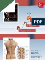 Saladin Anatomia 6a Diapositivas c13 MEDULA ESPINAL