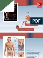 Saladin Anatomia 6a Diapositivas c17 SISTEMA ENDOCRINO