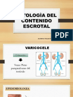 Patologias Del Contenido Escrotal