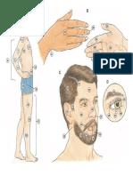 Completa las partes del cuerpo en inglés