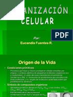 Organizacion celular
