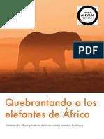 Reporte de Elefant