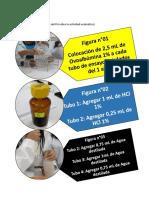 Informe de Bioquimica 6-2