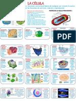 Actividad 3- Diseño de un esquema de la célula utilizando como recurso PowerPoint y sus herramientas de animación.pptx