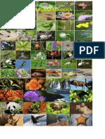 Diversidad biológica - imagen