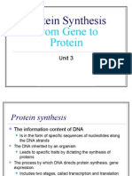 Protein Synthesis - Transcription and Translation