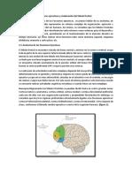 Desarrollo de Las Funciones Ejecutivas y Maduración Del Lóbulo Frontal.-yeaN PAUL CRUZ
