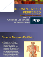 5 Sistema Nervioso Periférico