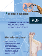 3 Médula Espinal, Sustancia Gris y Ganglios Raquideos