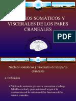 16 Núcleos Somáticos y Viscerales de Los Pares Craneales