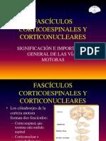 40 Fascículos Corticoespinales y Corticonucleares