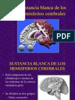45 Sustancia Blanca de Los Hemisferios Cerebrales