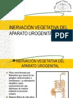 31 Inervación Vegetativa Del Aparato Urogenital