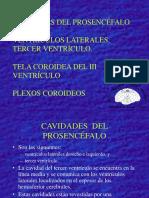 46 Cavidades Del Prosencéfalo