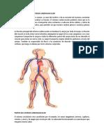 Funcionamiento Del Sistema Cardiovascular