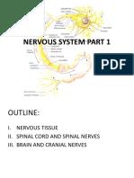 8 Nervous System Part 1