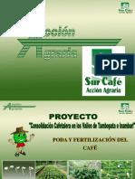 Poda y Fertilización Del Café