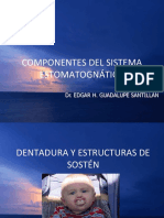 Componentes Del Sistema Estomatognatico