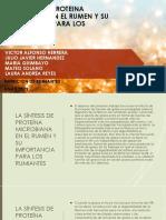 La Sintesis de Proteina Microbiana en El Rumen y Su Importancia Para Los Rumiantes