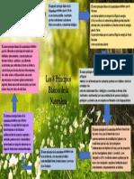 MapaConceptual-PrincipiosBasicosDeLaNaturaleza