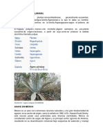 AGAVE PAVKA PROYECTO.docx