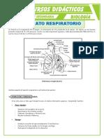 El-Aparato-Respiratorio-Partes-para-Quinto-de-Secundaria.doc