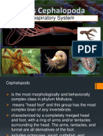 Class-Cephalopods.pptx