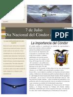 Dia Nacional Del Condor Andino