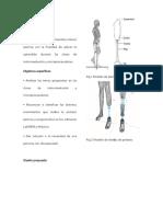 prótesis ortopédica