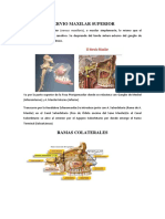 NERVIO MAXILAR SUPERIOR.docx
