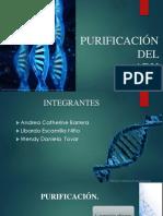 Purificación (1) (1)
