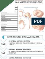 1 Medula y Meninges