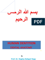1. Dental Anatomy 1