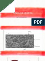 Clase 11, Organelos Celulares