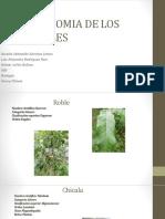 BIOOLOGIA Taxonomia de Los Arboles