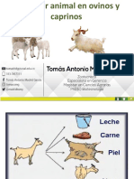 10. BA Ovinos y caprinos .pdf