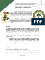 Tagetes ¿Pueden Ayudar a Mejorar e Incrementar Algunas Propiedades Medicinales de Plantas de Cannabis en Mexico